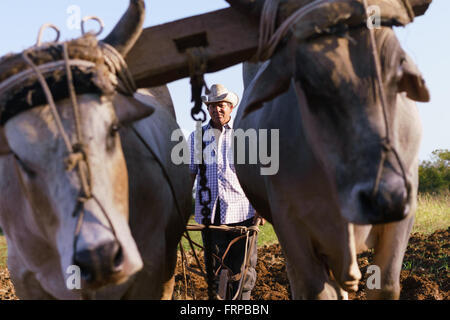 Farming and cultivations in Latin America. Middle aged hispanic farmer manually ploughing the soil with ox at the - Stock Photo