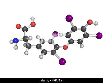 Thyroxine thyroid gland hormone molecule. Thyroxine is a thyroid gland hormone that plays a role in energy metabolism - Stock Photo