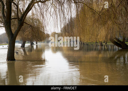 Floodwater flowing over the banks of the River Great Ouse Embankment, Bedford, Bedfordshire, United Kingdom. - Stock Photo