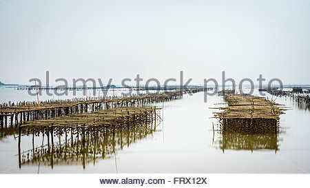 Oyster farm structures exposed during low tide, Ha Long Bay, Quang Ninh Province, Vietnam - Stock Photo