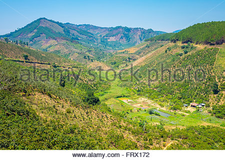 Coffee plantations in Central Highlands, Lam Ha District, Lam Dong Province, Vietnam - Stock Photo