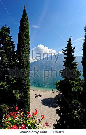 Cypress trees near the beach, Limone sul Garda, Lake Garda, Lago di Garda, Province of Brescia, Lombardy region, - Stock Photo