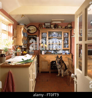 Alsation Dog Sitting In Front Of Old Pine Dresser In A Country Kitchen Stock Photo