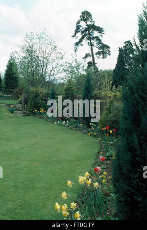 Daffodils and red tulips in border with small conifers in country garden in Spring - Stock Photo