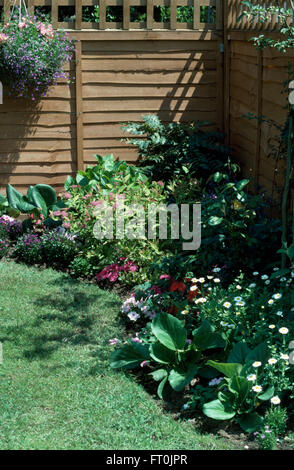 White daisies and pink achillea in a newly made border in a renovated garden - Stock Photo