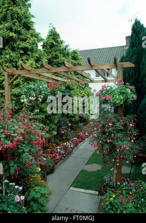 Standard fuchsias in borders beside paved path in a seventies suburban garden with conifers and a wooden pergola - Stock Photo