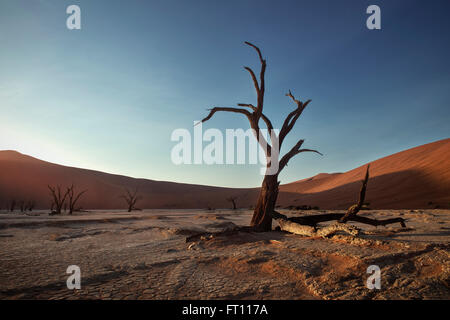 Dead camel thorn trees with red dunes at Dead Vlei, around Sossusvlei, Namib Naukluft National Park, Namibia, Namib - Stock Photo