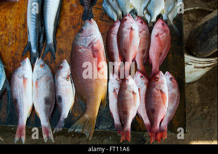 Fishes for sale at market stand on Playa Las Hamacas, Acapulco, Guerrero, Mexico - Stock Photo