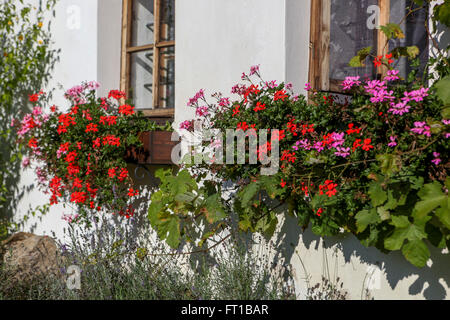 Geraniums in window boxes village building - Stock Photo