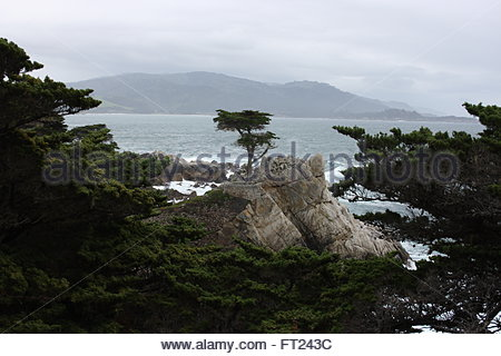 Lone Cypress Pine on the 17 Mile Drive on the Monterey Peninsula, Caliifornia - Stock Photo