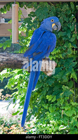 Beautiful blue parrot sitting on a branch - Stock Photo