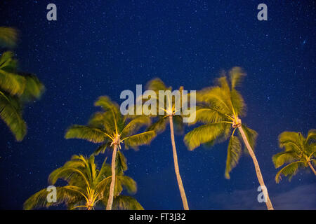 Starry night with palm trees blowing in the wind - Stock Photo