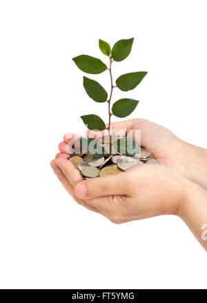 hand holding tree growing on coins isolated.saving money - Stock Photo
