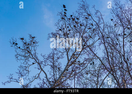Birds are sitting on the branches of trees under blue sky in the winter time. - Stock Photo