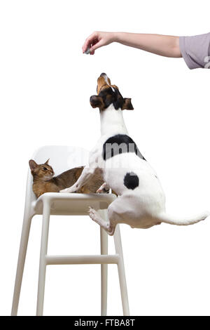 dog jumping on a chair to cat for ball - Stock Photo