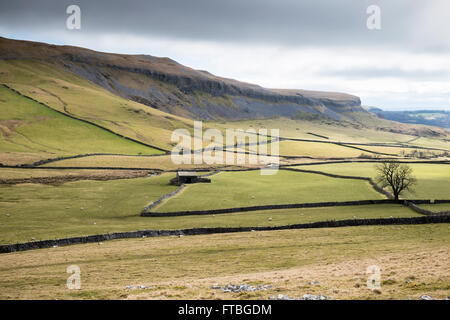Traditional stone walls and farm near Moughton in the Yorkshire Dales, England - Stock Photo