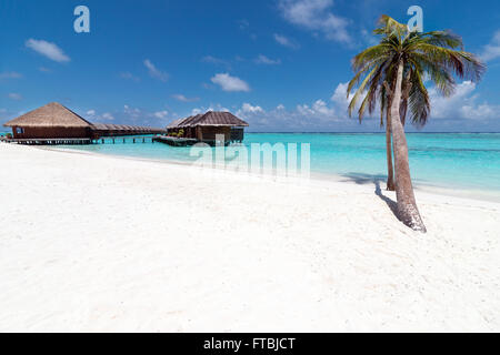 Leaning palm tree on a white sand beach by Meeru Island spa and water villas,  Maldives - Stock Photo