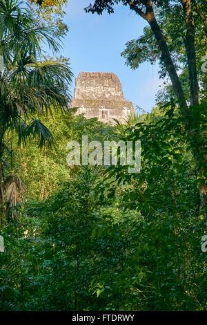 Maya Ruins - Temple IV, Tikal National Park, Guatemala, Yucatan, UNESCO - Stock Photo