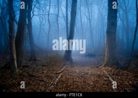 Eerie Foggy Misty Forest Woods - Stock Photo