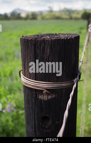 Close up of single wooden fence post next two summer field - Stock Photo