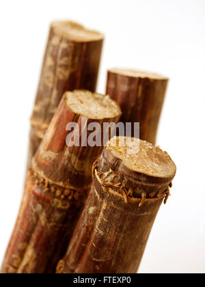 Sticks Of Raw Sugar Cane Cut To Show The Inside Stock