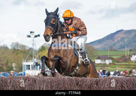 Eyton-on-Severn in Shropshire, UK. 28th March, 2016. 'Flembrandt' running in The Open Maiden Race at the Easter - Stock Photo