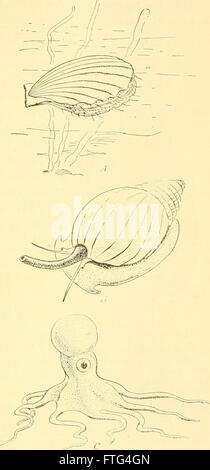 Elementary biology; an introduction to the science of life (1924) Stock Photo