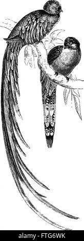 Fourteen weeks in zoology (1872) - Stock Photo
