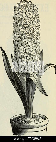 High grade 1899 bulbs and seeds for fall planting (1899) - Stock Photo