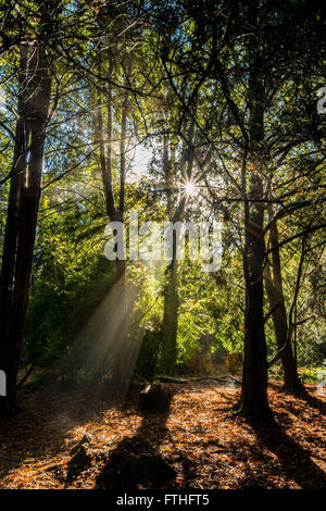 Sunlight in woodland - Stock Photo