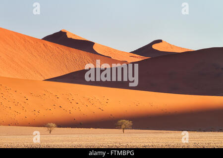 Mountainous sand-dunes and camelthorn acacia trees in the Namib desert in the Namib-Naukluft National Park of Namibia - Stock Photo