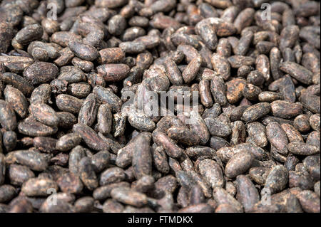 Cocoa seeds dried - Stock Photo