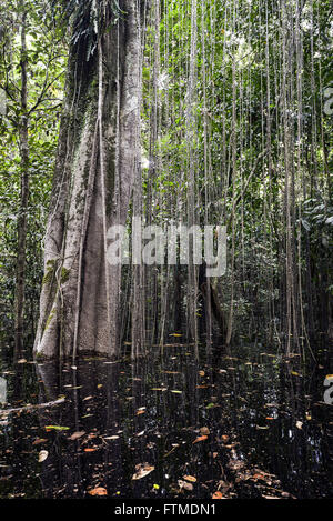 partially submerged trees in flooded area of the amazon - Stock Photo