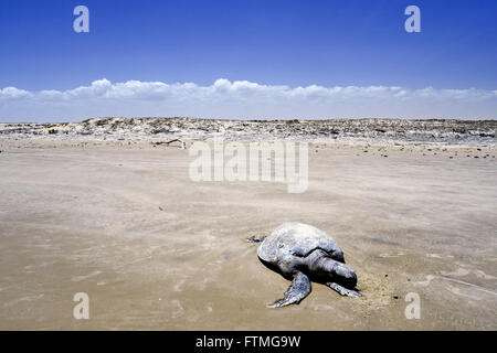 Dead on a beach between small and large turtle Maranhao Lencois - Stock Photo
