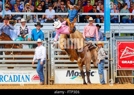 Cowboy on Bucking Bronco horse at Arcadia Rodeo, Florida, USA - Stock Photo
