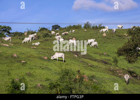 Creation of small cattle in the rural area of ??the city - Stock Photo