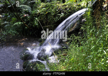 D`spout water through the native forest in the district of Monte Verde - Stock Photo
