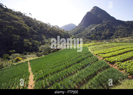 Plantation of chives and arugula in Correas - Stock Photo