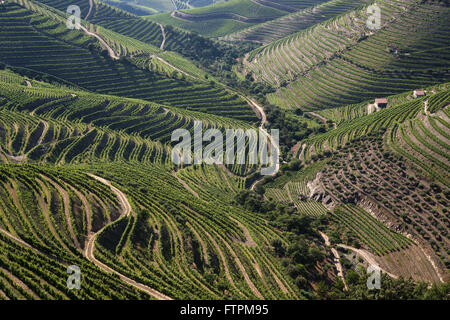 Vineyard for wine production known as - Porto - in the valley of the Douro Ervedosa - Stock Photo