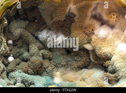 Fresh food colorful mold with multi shadows - Stock Photo