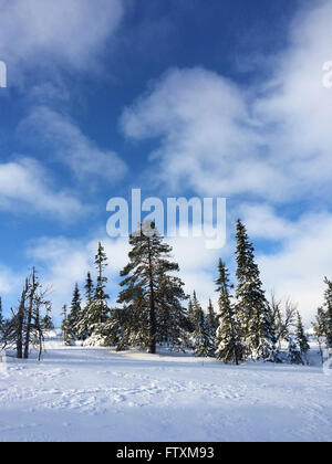 Landscape with Fir trees in the snow - Stock Photo