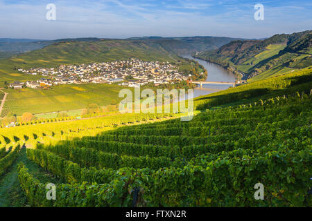 Bend in the river Moselle with the villages Leiwen and Trittenheim, western Germany. - Stock Photo