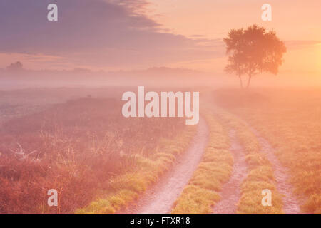 A path through moorland in The Netherlands on a beautiful foggy morning at sunrise. - Stock Photo