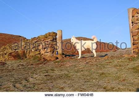 Holwick, Middleton-in-Teesdale, Co Durham, UK. 31st March 2016 A cold morning in the North Pennine hills and after - Stock Photo