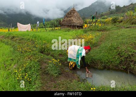 Gibi village Gurage, Ethiopia, October 2013 Belatu Anchamo, 20, filling a water container. - Stock Photo