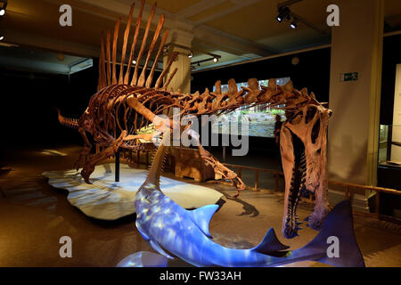 Worldwide unique skeleton replica of the biggest carnivorous dinosaur (Spinosaurus aegyptiacus), Naturkundemuseum - Stock Photo