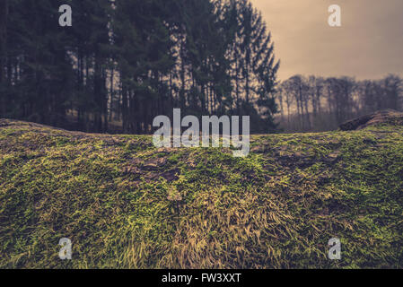 Wooden surface with moss in the forest - Stock Photo