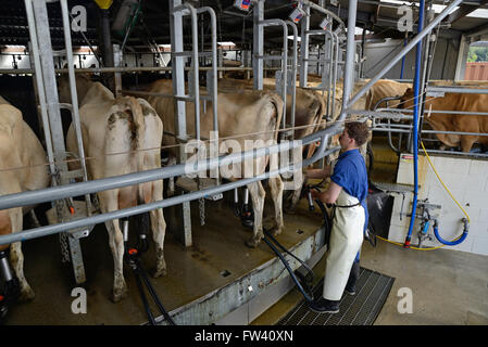 Best Food For Lactating Cows