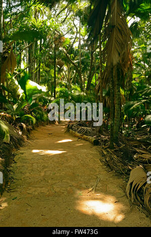 Wege und Vegetation im Vallee de Mai Nationalpark, Unesco Welterbe, Insel Praslin, Seychellen - Stock Photo