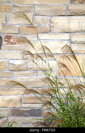 Zebra Grass next to a stone wall - Stock Photo